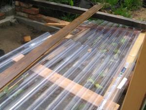 Tomaten Setzlinge unter dem provisorischem Dach