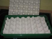 Tomaten in Eierpackungen ansäen