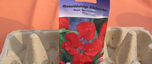 edelwicke_tiefscharlach