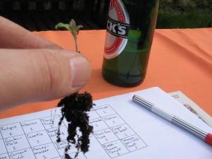Das 16Uhr Bier half der Hand, schön ruhig zu pikieren :)