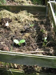 Hoffentlich wirksamer Schutz vor Schnecken auf dem Kompost