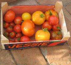 http://www.mein-gewaechshaus.de/wp-content/uploads/2015/05/tomaten_online_kaufen.jpg