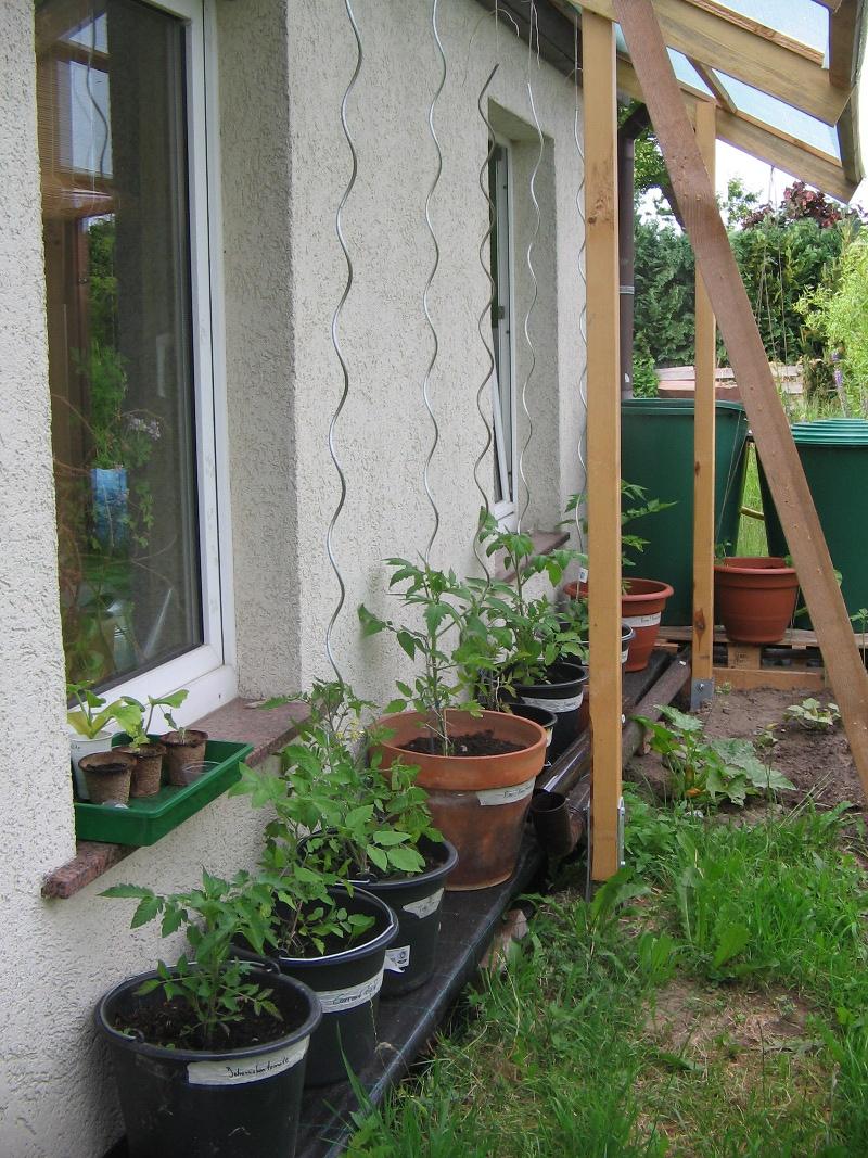was macht man mit zu vielen tomaten m ein gew chshaus selber bauen. Black Bedroom Furniture Sets. Home Design Ideas